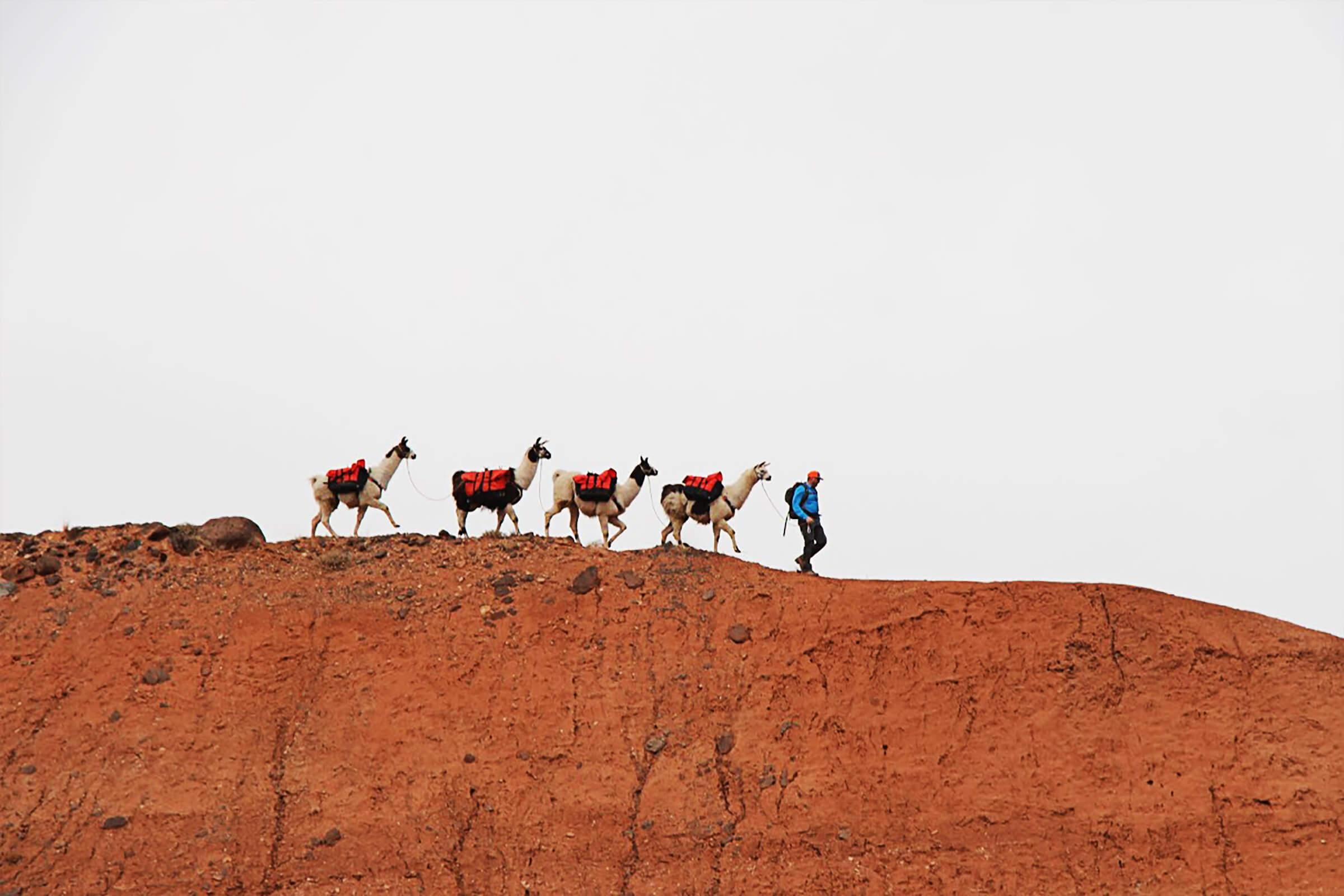 Capitol Reef | Utah - Llama Adventures