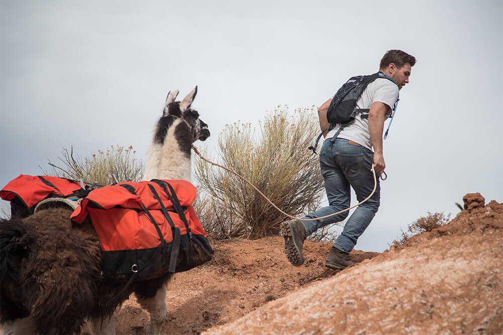 Capitol Reef Utah - Pack Llamas - Day Hikes
